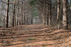 Hiking trail leading the way royalty free stock image