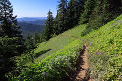 Hiking Trail. This trail leads through a clearing on the side of a mountain as it climbs to the lookout on top of Iron Mountain in the Oregon Cascades Stock Photo