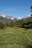 Hiking Trail lined with wildflowers in the mountains Stock Photography