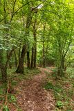Deciduous forest in the summer Stock Image