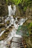 Hiking trail through a lush gorge in Slovenský Raj, Slovakia Stock Images