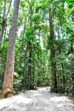 Hiking trail in lush green beach forest stock image