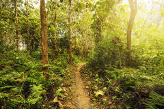 Hiking Trail Through Lush Green Forest Stock Photo