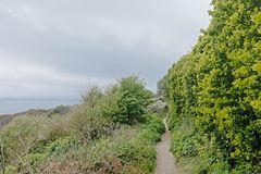 Hiking trail in between lush green shrubs along the cliffs of howth , ireland. Hiking trail in between lush green shrubs along the north sea coast of howth royalty free stock photography