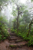 Hiking trail in lush rainforest Royalty Free Stock Photo