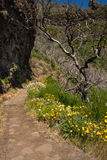 Hiking trail on Madeira Royalty Free Stock Image
