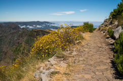 Hiking trail on Madeira. Hiking trail with flowers on Pico Ruivo stock image