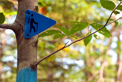 Hiking trail marker on a tree in a forest Royalty Free Stock Photography