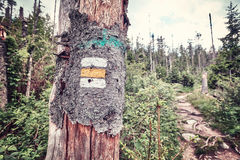 Hiking trail marking painted on tree. Royalty Free Stock Images