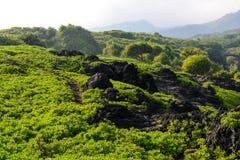 Hiking Trail in Maui Hawaii Royalty Free Stock Photos