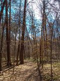 Hiking Trail at Mayo River State Park. Leafless winter trees stand along a hiking trail at Mayo River State Park in North Carolina stock photos