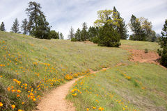 Hiking Trail. Through the meadow to forest stock photo