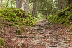 Hiking trail in mossy forest stock photos