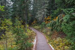 Hiking Trail in Mountain Evergreen Forest in Autumn. Beautiful landscape of paved hiking trail through mountain forest of evergreens in Autumn. Rainy Lake trail royalty free stock photo