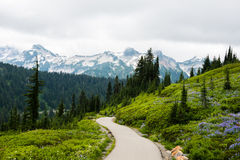 Hiking Trail through Mountains. A hiking trail winds through the mountains, with green vegetation and wildflowers flanking the path and an evergreen forest and Stock Photos