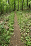 Hiking Trail in the Mountains. Hiking trail located in the beautiful Blue Ridge Mountains of Virginia, USA royalty free stock photo