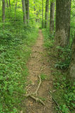 Hiking Trail in the Mountains. Hiking trail located in the beautiful Blue Ridge Mountains of Virginia, USA stock image