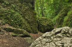 Hiking trail in the mountains. Path among the rocks in the beech forest. Tourism Royalty Free Stock Photography