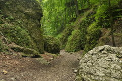 Hiking trail in the mountains. Path among the rocks in the beech forest. Tourism Stock Images