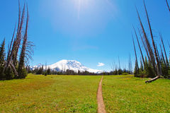 Hiking trail. Mt Rainer, Washington Royalty Free Stock Photo
