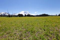 Hiking trail. Mt Rainer, Washington Stock Photo