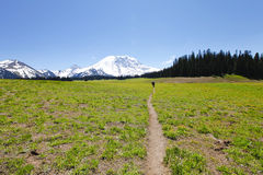Hiking trail. Mt Rainer, Washington Royalty Free Stock Images
