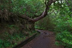 Hiking trail in the nature along levada on Madeira. Hiking trail in the nature along levada on Portuguese island of Madeira stock image