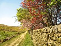 Hiking trail near Skipton, England. Hiking trail in springtime in the vicinity of Skipton, Yorkshire, England, with fields and heath on one side and a stone wall Royalty Free Stock Photography