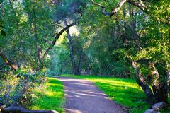 Hiking trail in the park in spring. It was taken in Spring in California Park Royalty Free Stock Photography
