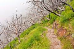 Hiking trail passage Pico Arieiro to Pico Ruivo - burned trees along the path Stock Photography