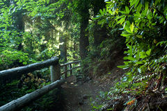 Hiking trail Path in Lush Forest. A path with rails winding through a lush green forest Royalty Free Stock Image