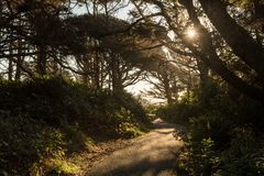 Hiking trail on a path between trees along the coast of Cape Perpetua Scenic Area stock photos
