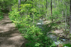 Hiking Trail by a Peaceful Mountain Stream. Hiking trail located by a mountain stream in the Blue Ridge Mountains of Virginia, USA Stock Images