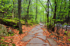 Hiking Trail through Pennsylvania Forest Stock Images
