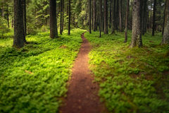 Hiking Trail. Photo of hiking trail in the woods. Taken with tilt-shift lens to achieve dreamy look. Excellent for background and design work Royalty Free Stock Photos