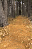 Hiking trail in a pine woods in New England. Royalty Free Stock Image