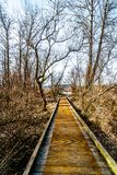 Hiking Trail from Poplar Bar to Two-bit Bar in Glen Valley Regional Park near Fort Langley, British Columbia, Canada. On a nice winter day royalty free stock photo