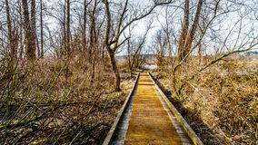 Hiking Trail from Poplar Bar to Two-bit Bar in Glen Valley Regional Park near Fort Langley, British Columbia, Canada. On a nice winter day royalty free stock photography