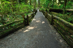 Hiking trail in rain forest Royalty Free Stock Photos