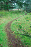 Hiking trail in rain forest. A winding hiking trail inside a rain forest, gulf islands national park, British Columbia, Canada Stock Image