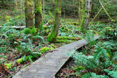 Hiking trail in rain forest Stock Images
