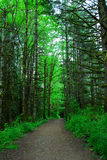 Hiking trail in rain forest Stock Photography