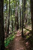 Hiking trail in a redwood Sequoia sempervirens forest, Butano State Park, San Francisco bay area, California stock photography