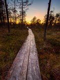 Hiking trail in Selisoo, Estonia. royalty free stock photos