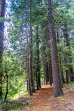 Hiking Trail in Sequoia Park Royalty Free Stock Images