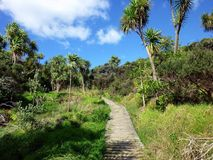 Hiking trail. In Shakespear Regional Park near Auckland Royalty Free Stock Image