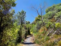 Hiking trail. In Shakespear Regional Park near Auckland Stock Image