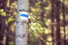Hiking trail sign/mark in the mountain. Hiking mark on a tree with white and blue colors in Bulgarian mountain Stock Images