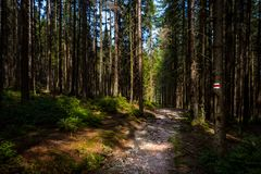 Hiking trail sign mark painted on a tree. Path leading trough the beautiful Bohemian Forest National Park. Trekking. Hiking trail sign mark painted on a tree stock photos