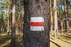 Hiking trail sign on a tree. Red an white hiking trail sign on a tree Royalty Free Stock Images